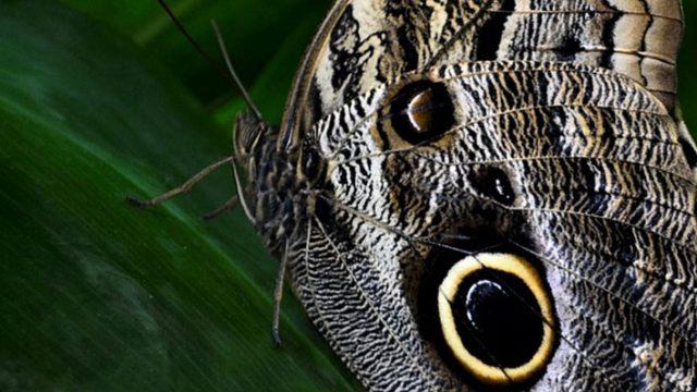 Sustainable Ecosystems Keeper Talk at Safari Niagara