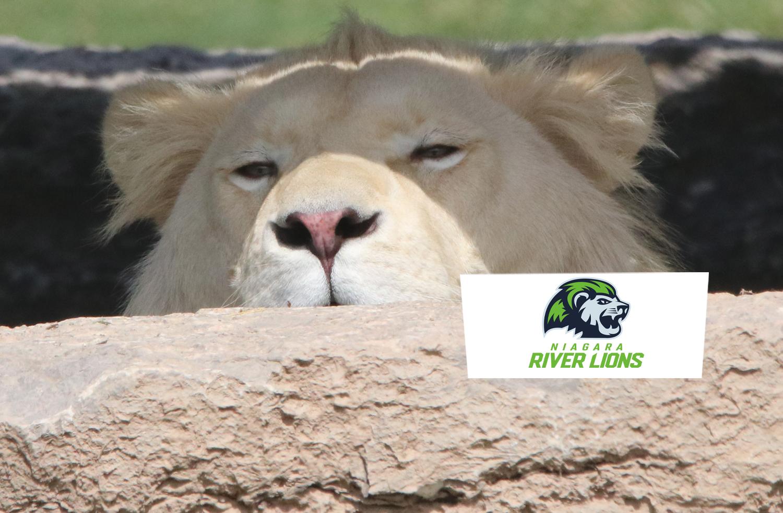 Safari Niagara   Niagara River Lions Day